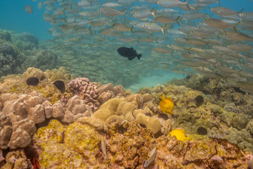 School of fish swimming over coral reef and sand
