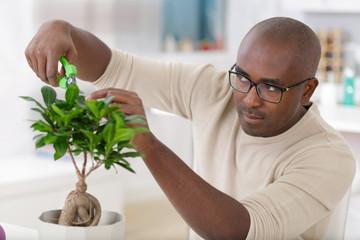 Printed kitchen splashbacks Bonsai man taking care of a small bonsai tree