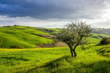 green fields and hills in Crete Senesi in Tuscany Wall mural