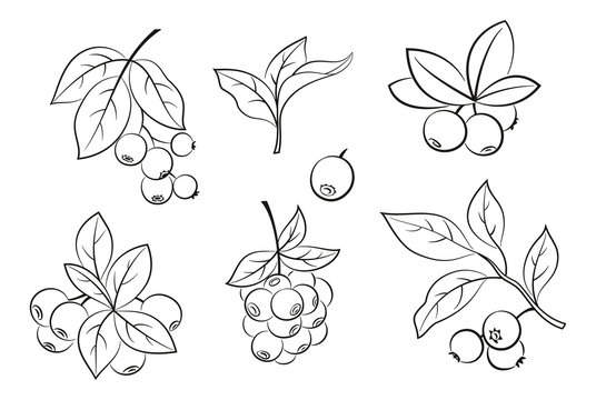 Set of Blueberries Branches, Berries and Leaves, Black Pictograms Isolated on White. Vector