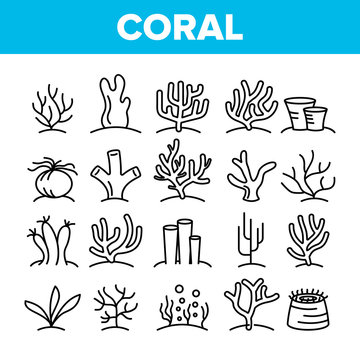 Corals Reefs And Seaweed Vector Linear Icons Set. Ocean Corals, Underwater Sea Life Outline Symbols Pack. Marine Flora And Fauna. Aquarium Natural Decoration Isolated Contour Illustrations