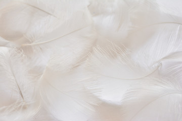 White feather of seagull Wall mural