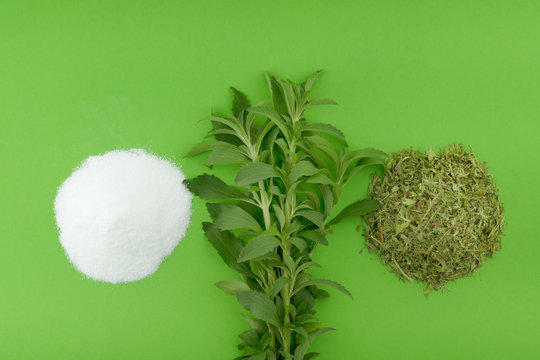 Stevia rebaudiana. Stevia fresh herb twigs, dry shredded stevia and white powder on a bright green background.Natural sweetener in powder from stevia plant