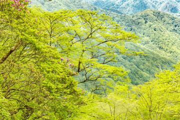山奥にある新緑の木