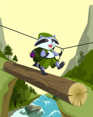 Scout raccoon goes on a log. Crossing the mountain river