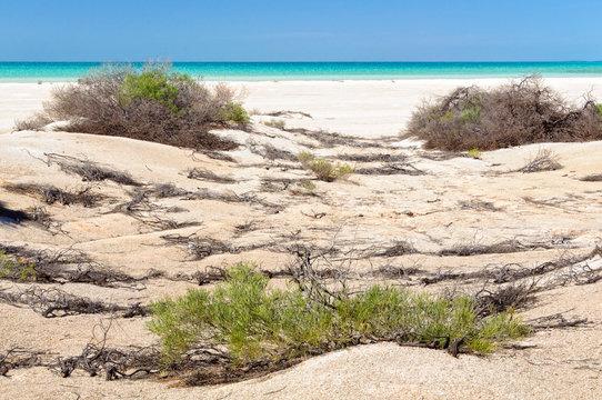 Shrubs at Shell Beach - Denham, WA, Australia