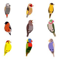 Poster Oiseaux, Abeilles Little Birds Set, Amadin, Bullfinch, Canary, Parrot, Nightingale, Goldfinch, Budgerigar, Cute Home Pets Vector Illustration