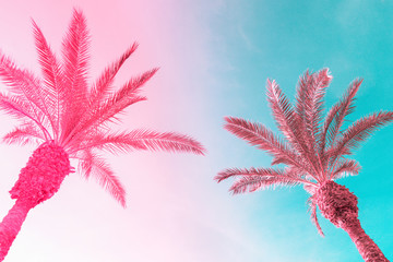 Wall Murals Palm tree Two tall palm trees on toned gradient pink blue sky with light fluffy clouds. Creative trendy summer tropical background. Vacation travel concept. Copy space