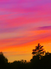 Wall Mural - Landscape with sunset and silhouettes of trees. Beautiful view of bright colorful sky happened on evening decline in the summer evening.