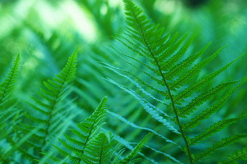 green leafs of fern macro image