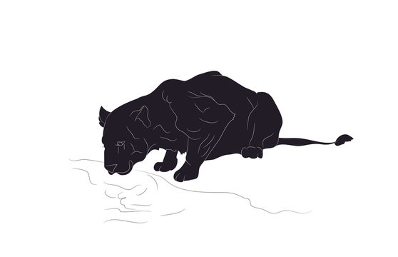 vector illustration of a lioness who drinks water, silhouette