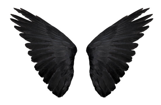 two big black raven wings isolated on white background