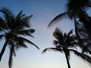 Backlit photos Of coconut trees on the sky background