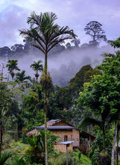 Morning in tropical jungle