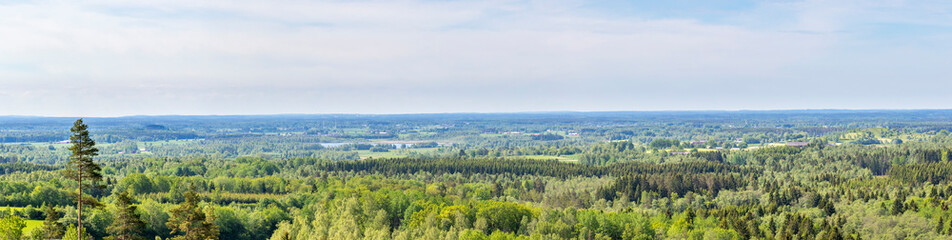 Panorama landscape view of a woodlands in summer