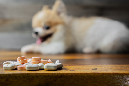 veterinary medicine, pet, animals, health care concept - focus on yellow pills, tablets with blur Pomeranian dog sitting on white background, isolate.