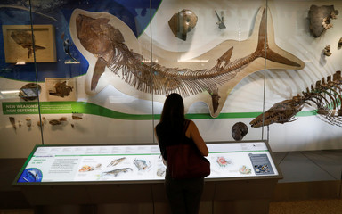 Preview of the Smithsonian's Natural History Museum dinosaur and fossil hall in Washington