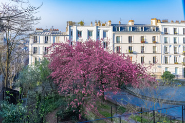 Montmartre, a very romantic parisian place with a cherry tree, and typical houses in background