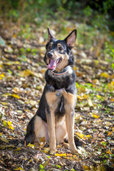Portrait of mongrel dog on autumn forest
