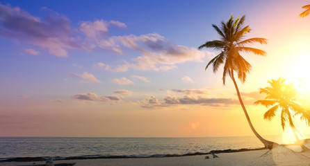 Art summer  vacation background; Palm tree on a tropical beach sunset