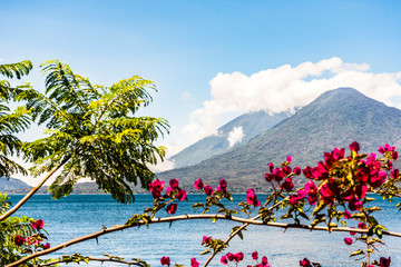 Atitlan & Toliman volcanoes on Lake Atitlan with pink bougainvillea flowers in foreground, Guatemala, Central America