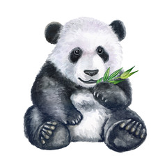 Cute panda with bamboo isolated on white background. Bear. Watercolor. Illustration. Clip art. Hand painted.