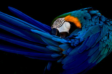 Tuinposter Papegaai Blue and gold macaw portrait