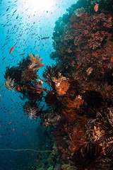 Fototapete - Colorful fish swarm over a coral reef in Komodo National Park, Indonesia. This tropical region is a popular destination for scuba divers and snorkelers.