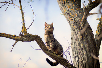 Beautiful gray striped cat on a tree against the blue sky. Cheshire Cat