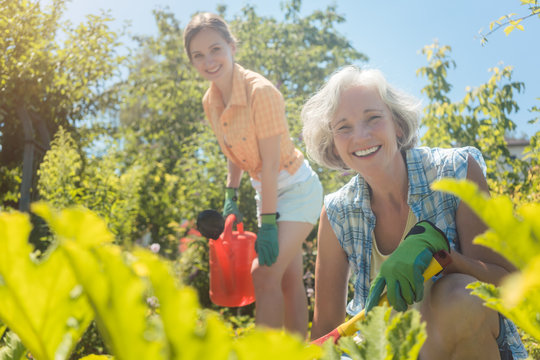Senior woman working in the vegetables while daughter is watering garden