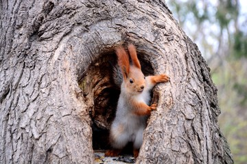 Photo sur Aluminium Squirrel squirrel. tree fun