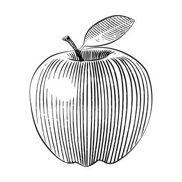 woodcut style apple illustration line art