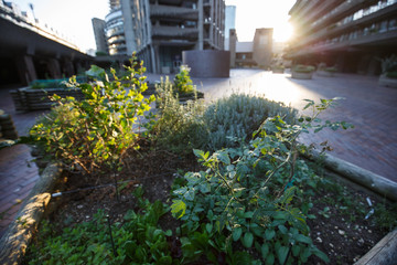 Urban gardening in the city square.