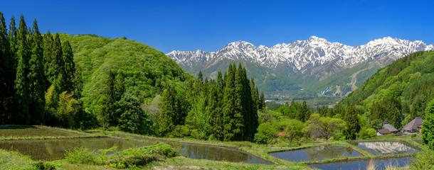 パノラマ 水田と北アルプス白馬三山の景色