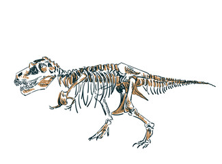 dinosaur skeleton vector sketch isolated clip art