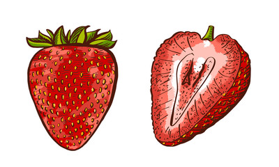 Whole and half of strawberry. Hand drawn strawberries. Vintage engraving illustration for logotype, poster, web.