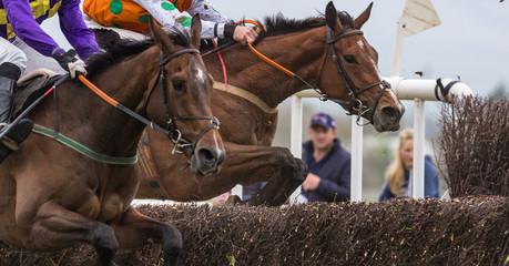 Close up on two competing Race horses and jockeys jumping a hurdle during a race