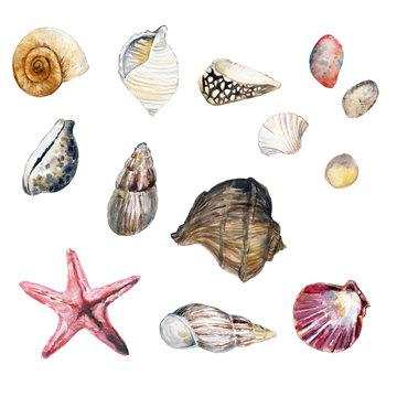 Watercolor seashells illustration clip art, beach wedding, summer illustration, sea life , invitations, postcards, graphic elements, hand painted illustration