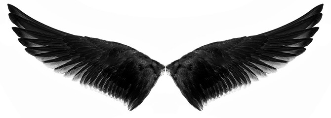 black wings on a white