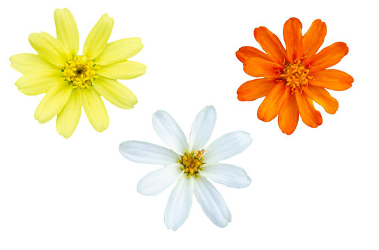 Beautiful flowers with white patterned background
