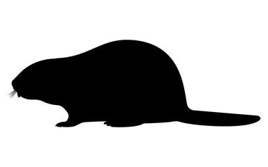 Vector illustration black silhouette of a beaver