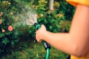 Fototapeta Watering garden with hose sprinkler obraz