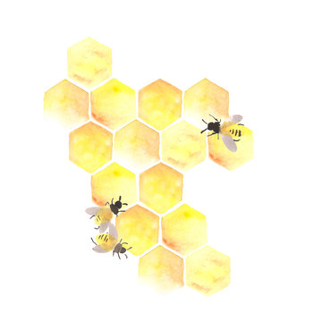 Bee honeycomb with honey in a hexagon. the bees are working in the hive