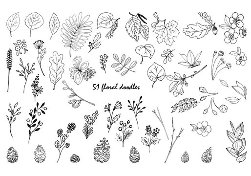 Set of 51 hand drawn doodles, sketch. Botanical illustration. Different leaves and berries outline isolated on the white background..