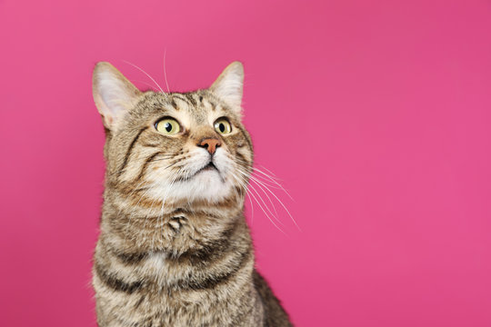 Cute tabby cat on color background, space for text. Friendly pet