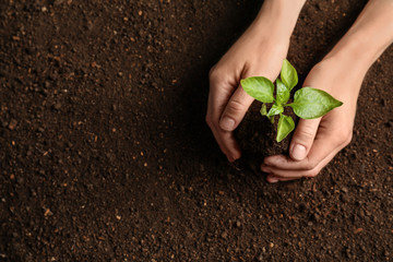Woman holding green seedling on soil, top view. Space for text Wall mural