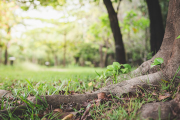 Big tree roots on the grass and beautiful natural background
