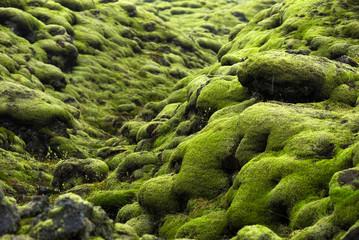 Fototapeta premium Pole lawy Eldhraun na Islandii