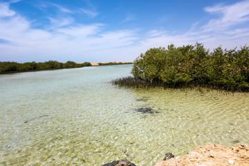 Ras Mohammed Mangrove Channel sand Egypt.