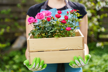 Photo of unrecognizable woman in gloves with box with roses standing in garden